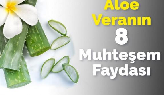 Aloe Veranın 8 İnanılmaz Faydası