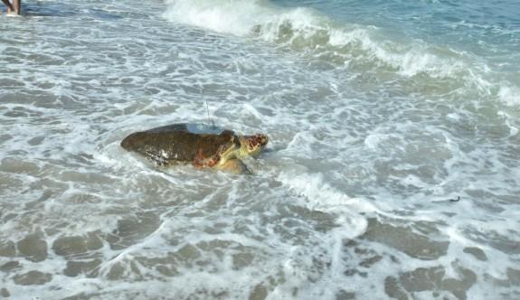 Astrid, denizine kavuştu