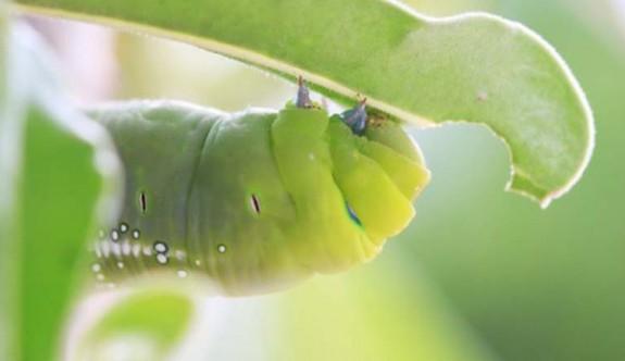 Çığlık Atarak Farklı Türleri Uyaran Bitkiler