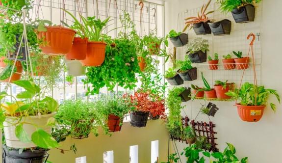 Evde çiçek bakımının püf noktaları