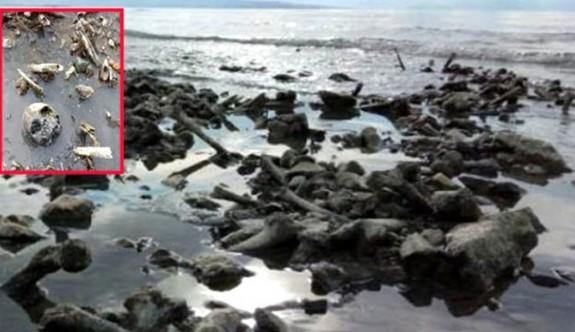 Van Gölü sahilinde insan kafatası ve kemikleri bulundu