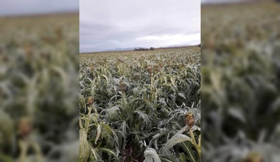 Güney'de  de enginar ve kabaklar dondan zarar gördü