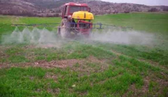 Tarım Dairesi yenilebilir otlar konusunda uyardı
