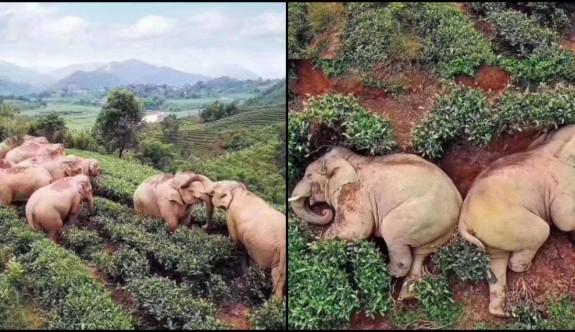 İzolasyon Hayvanlara Yaradı