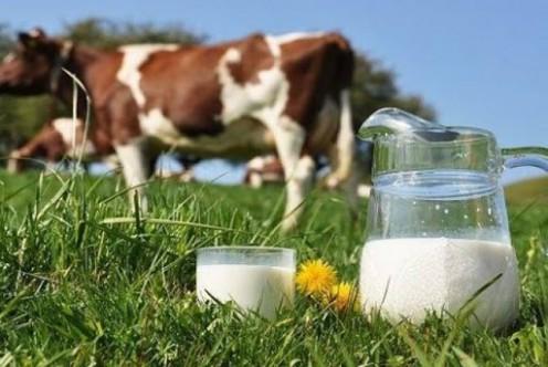 SÜTEK'den üreticilere süt üretimini düşürün çağrısı