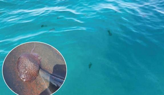 Denizanası Hakkında Bilinmeyenler