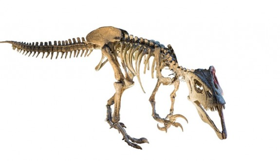 Patagonya'da 70 milyon yıllık dev fosil