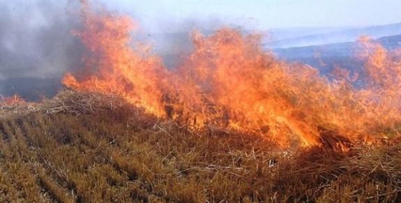 Son 24 saatte yüzlerce dönüm ekin ve balya yandı