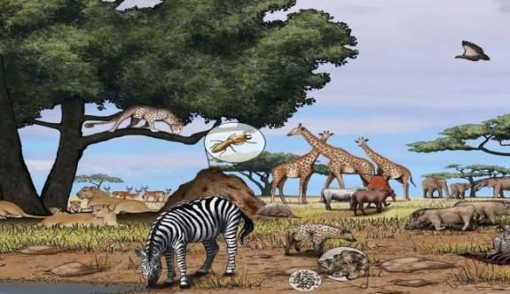 Canlıların Oluşturduğu Düzen: Besin Zinciri