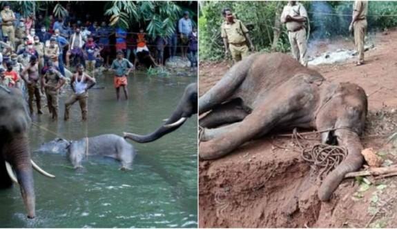 Hindistan'da vahşice katledilen hamile fil