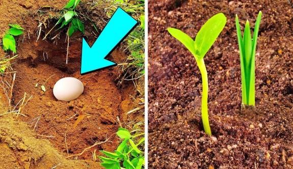 Saksının dibine yumurta koyun bakın ne oluyor