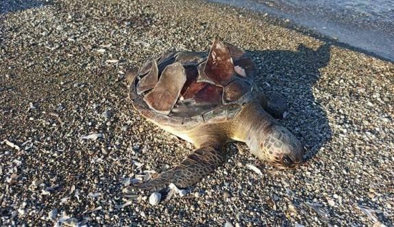 Kaplumbağa katliamı