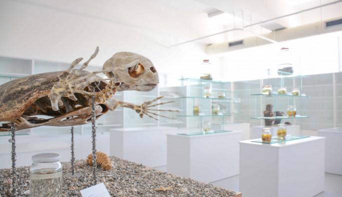 Kıbrıs Herbaryum ve Doğa Müzesi'ne girişler ücretsiz