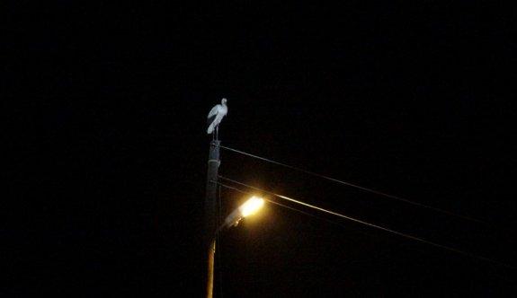 Leylekler için 3 mahalle elektriksiz kaldı