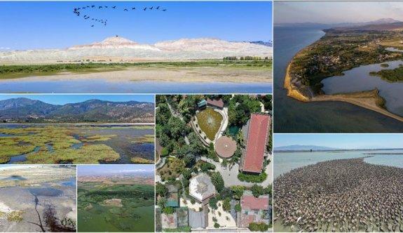 Türkiye'nin büyüleyen güzelliği: Kuş cennetleri
