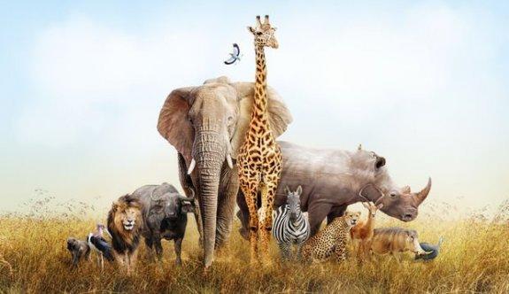 Burcunuz hangi hayvanın özelliklerini yansıtıyor?