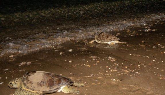 İlk kez beş deniz kaplumbağası birlikte  mavi özgürlüğe kavuştu