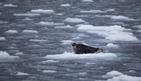 Kuzey Kutbu adım adım felakete sürükleniyor