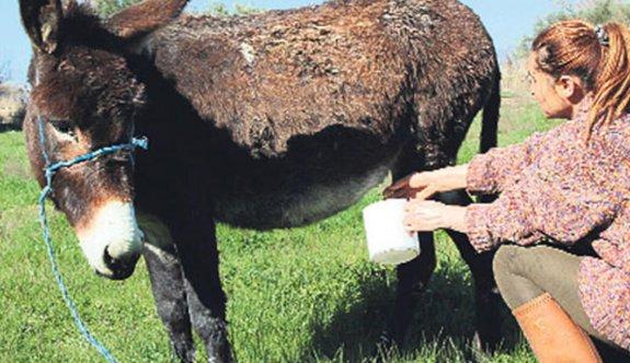 Litresi 100 liraya satılan Eşek Sütünde ölüm riski