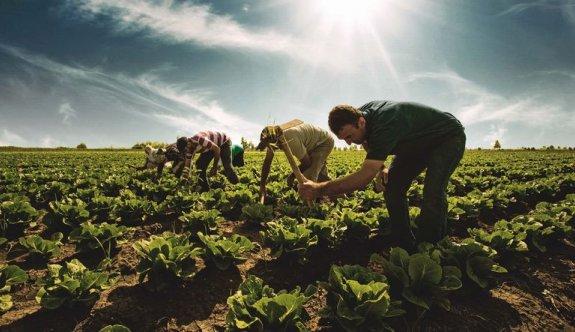 Koronavirüs, Güney'de tarım sektörünü de vurdu