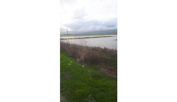 Karpaz bölgesi aşırı yağışlardan mağdur