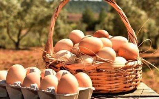 Köyce Organik Çiftliği'ne organik yumurta pazarlamasına izin verildi