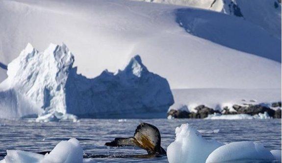 Antarktika'da Mars minerali bulundu