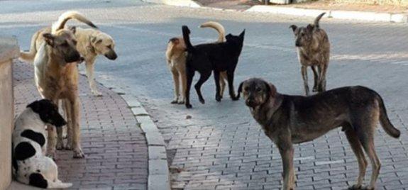 Başıboş köpekler endişelendiriyor