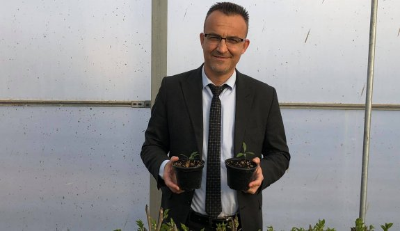 Sert çekirdekli meyve ağaçları için anaç fide üretimine başlandı