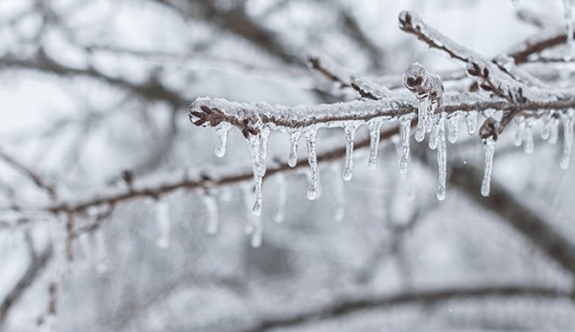 Yarın ve cuma sabahı don olayı bekleniyor