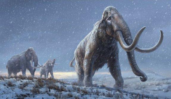 1,2 milyon yıllık DNA tespit edildi