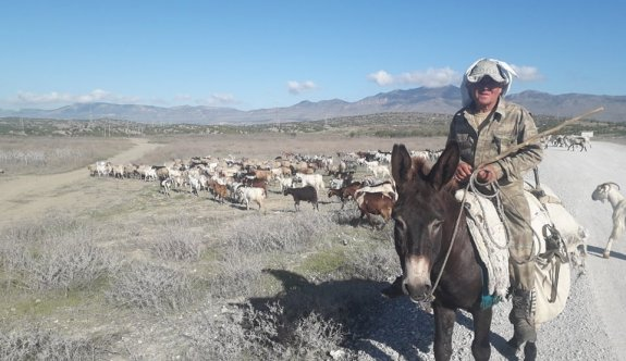 Anamın karnından çıktığımdan bugüne çobanım