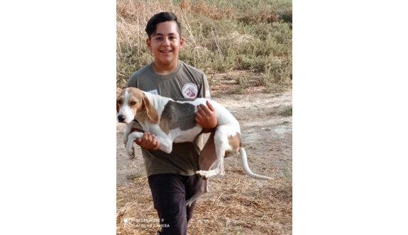 Avcılık Federasyonu'ndan, köpek gezdirme uyarısı