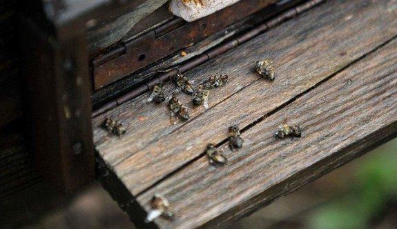 Arı ölümleri korkutuyor