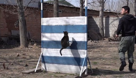 Eski askerden kediye komando eğitimi