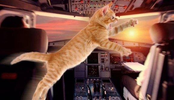 Havada panik: Pilota kedi saldırdı