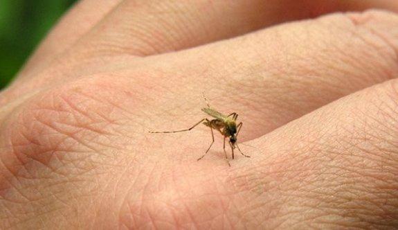Sivrisinek ve karasinekler mesaiye erken başladı