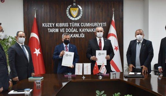 Türk Bankası adına Kalkanlı bölgesine 30 bin fidan dikilecek