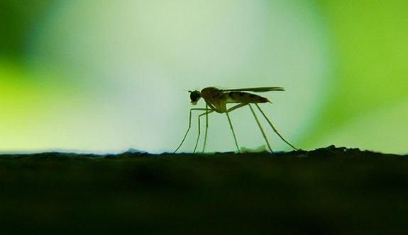 Sivrisinek ve ot sinekleriyle mücadele başlamalı