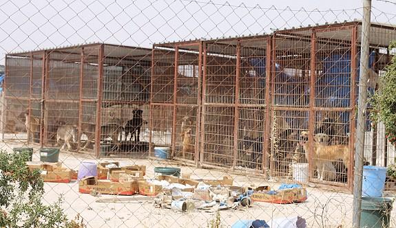 40 köpek ölüme terk edildi