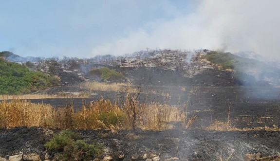 Karpaz'da 34 dönüm kül oldu