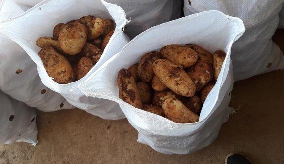 Patateste rekolte beklentinin altında