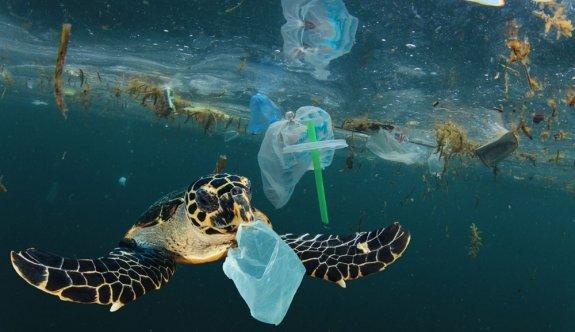 Plastik kirliliği Akdeniz'de Caretta carettaları öldürüyor