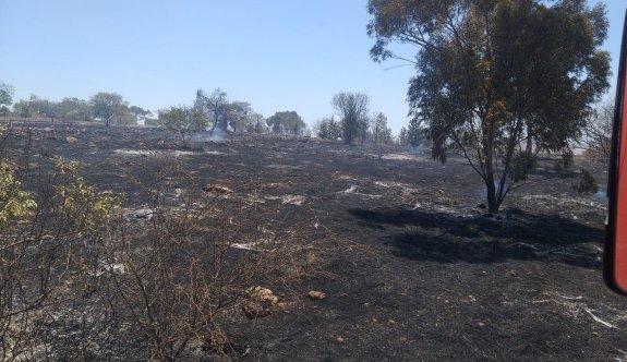 100 ağaç yandı