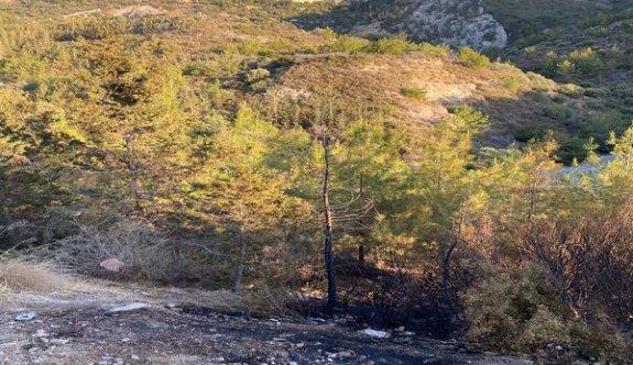 Çatalköy'de  6 dönümlük alanda çam ağaçları yandı