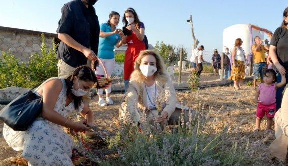 Sibel Tatar, lavanta hasadına katıldı