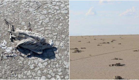 """Tuz Gölü'nde Katliam! Binlerce Flamingo Yavrusu """"Susuzluktan"""" Öldü"""