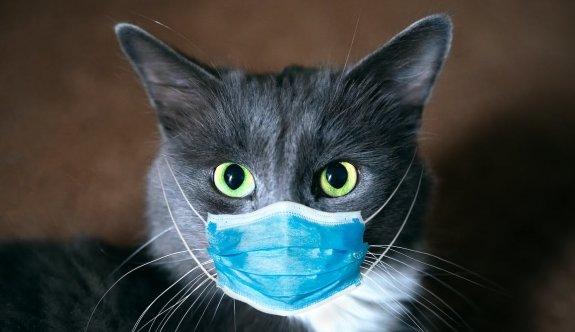 YDÜ'nün ortaya çıkardığı evcil kediye İngiliz varyantının enfekte olması dünyada ses getirdi