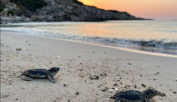 """""""Karşıyaka Güzelyalı Sahili Kaplumbağa Projesi""""nin ilk etabı hizmette"""