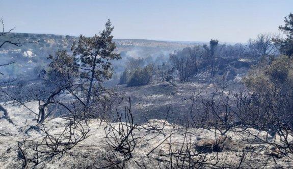 Bafra'da yangın ucuz atlatıldı